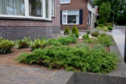 Planten in Stropellets